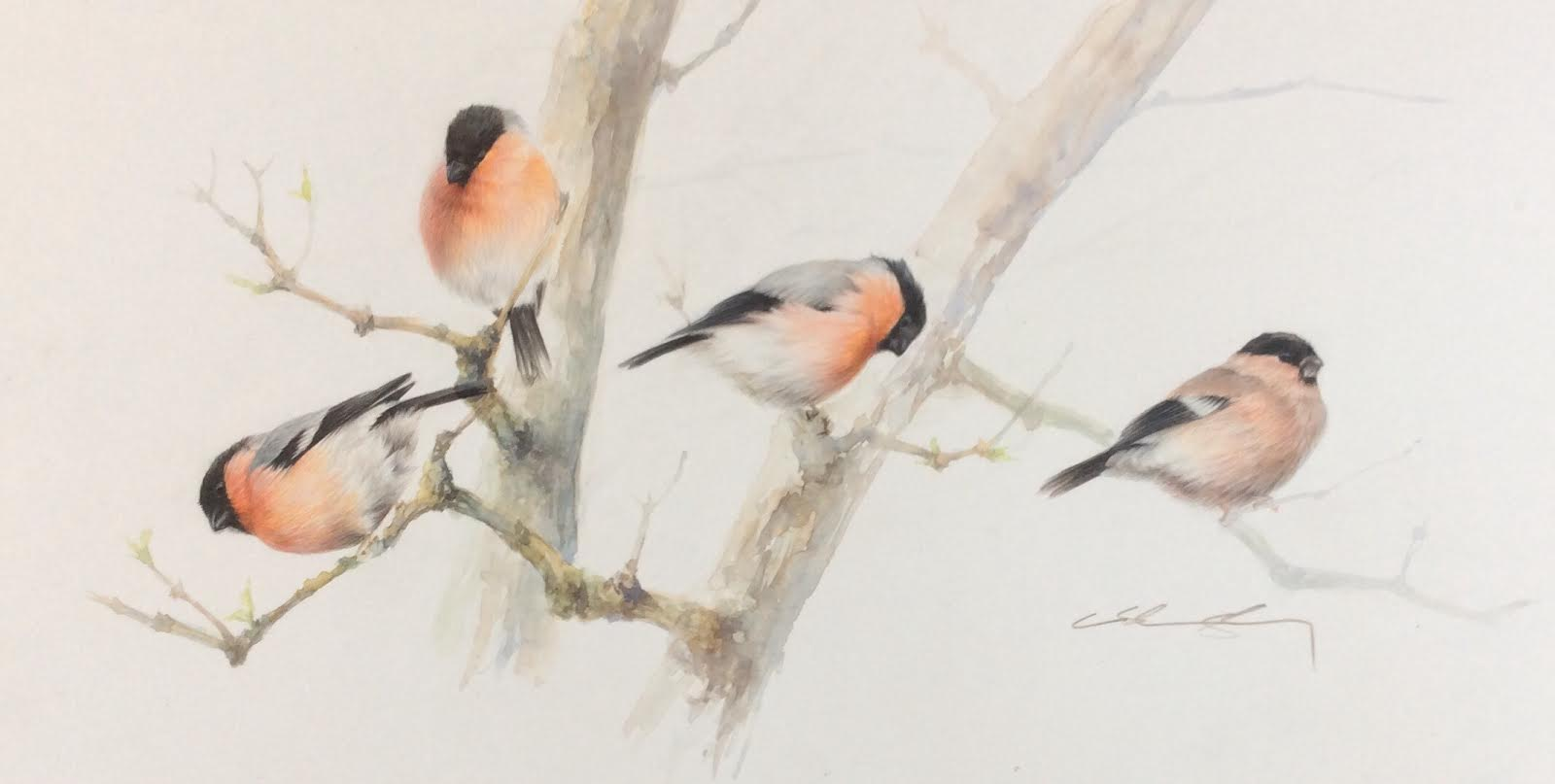 A Bunch Of Bullfinch