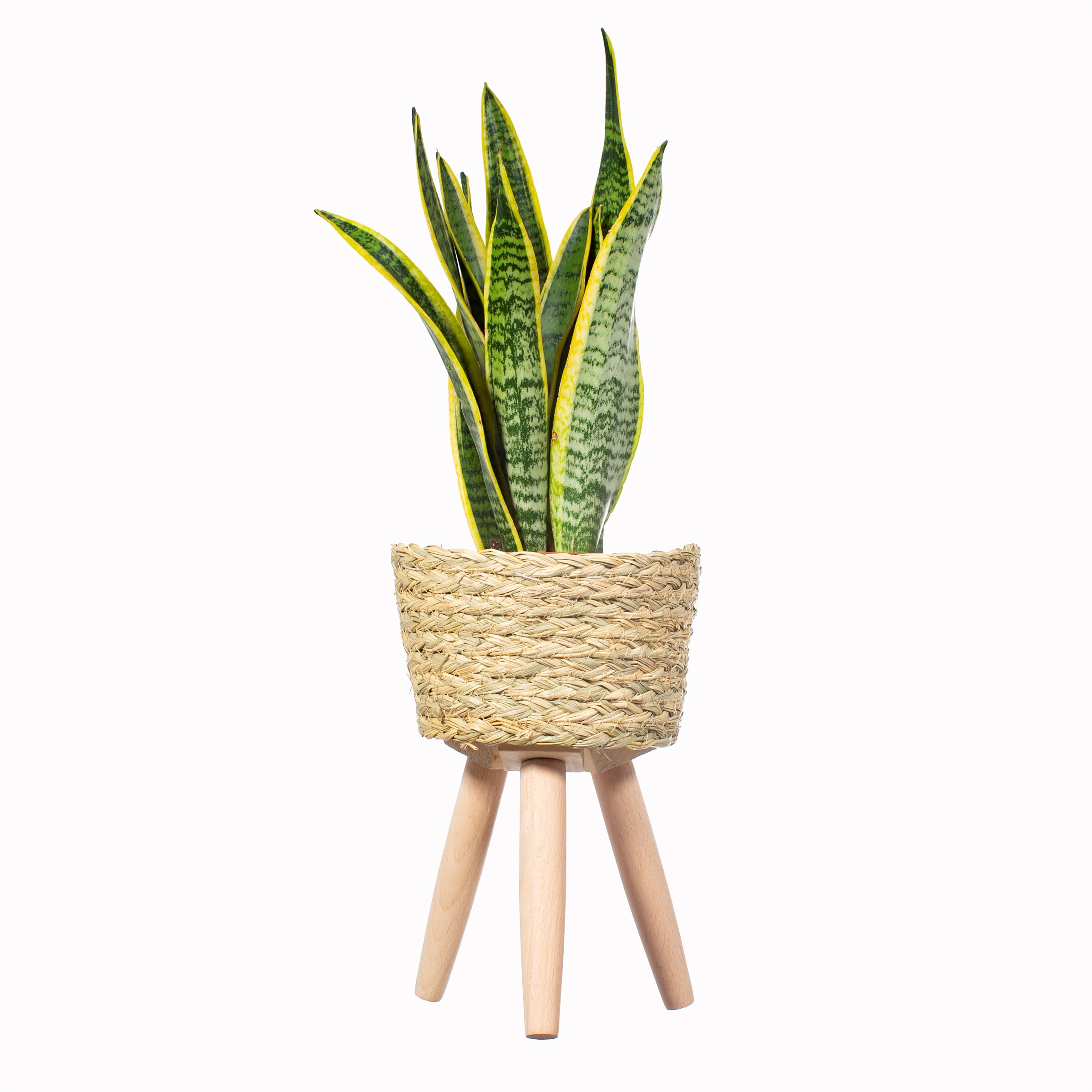 COMING SOON – BASKET PLANTER ON LEGS SMALL